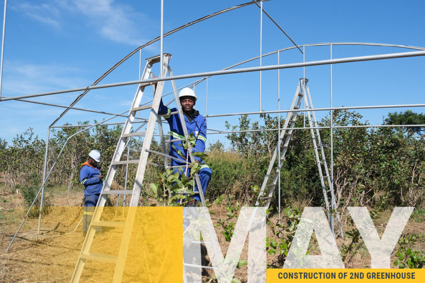 Image of Kuwala's second greenhouse construction. Frame of greenhouse is being installed